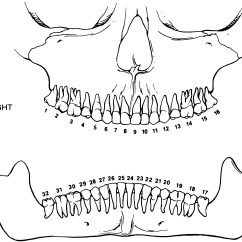 Dog Anatomy Diagram Lymph Nodes Hsh Wiring 3 Way Switch Brachial Plexus Html Imageresizertool Com