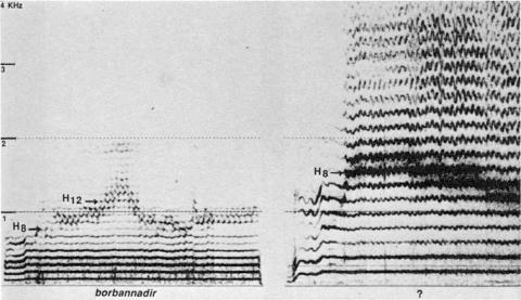 Fig. 15: Tuva (URSS). Disque Melodia, face A, plage 5. Style borbannadir, pièce «Boratmoj, Spoju Borban», par Oorzak Xunastar-ool.