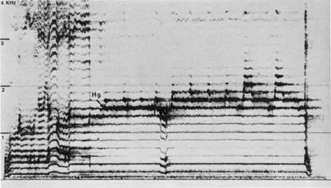 Fig. 24: Tuva (URSS). Disque Melodia, face A, plage 1. Style sigit, pièce «Reka Alas» (même pièce que fig. 23).