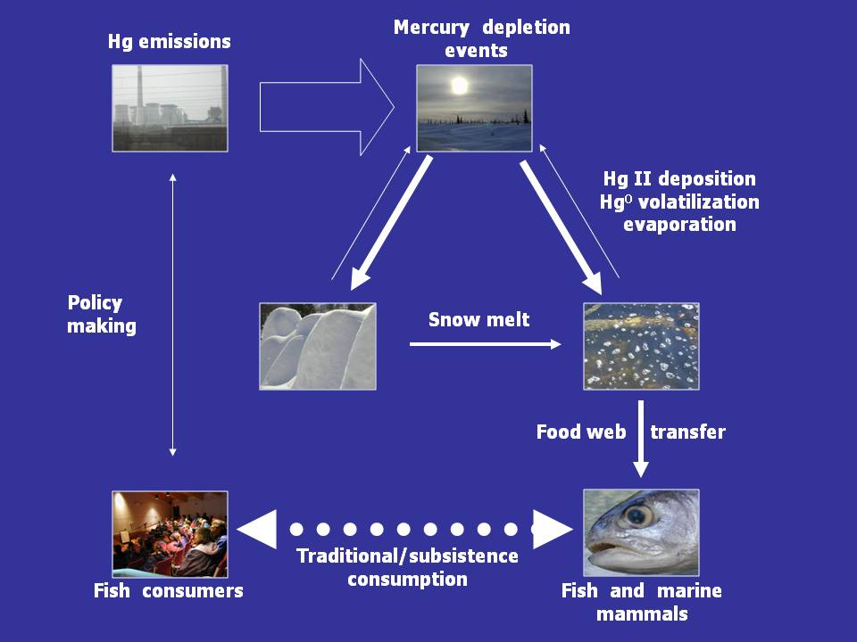 Figure Is A Conceptual Diagram Of The Atmospheric Mercury Cycle