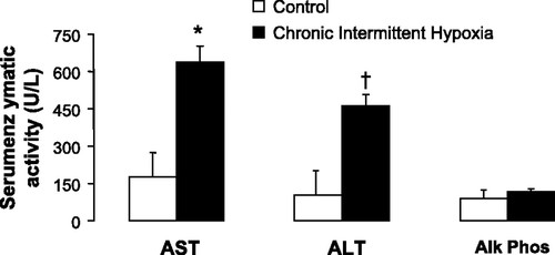 Chronic intermittent hypoxia causes hepatitis in a mouse