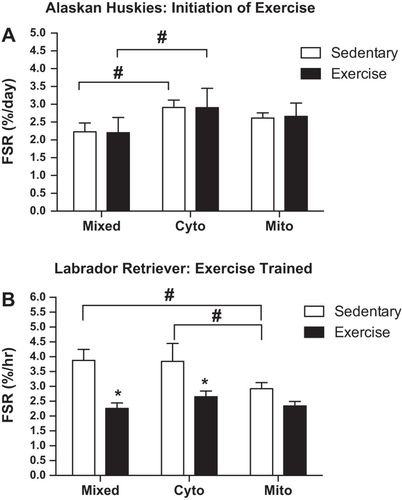 Assessment of protein synthesis in highly aerobic canine