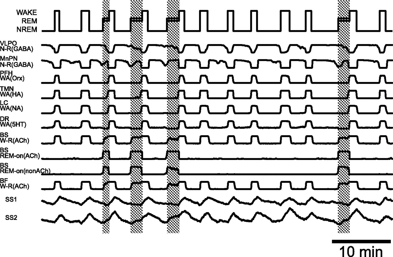 A Quartet Neural System Model Orchestrating Sleep and
