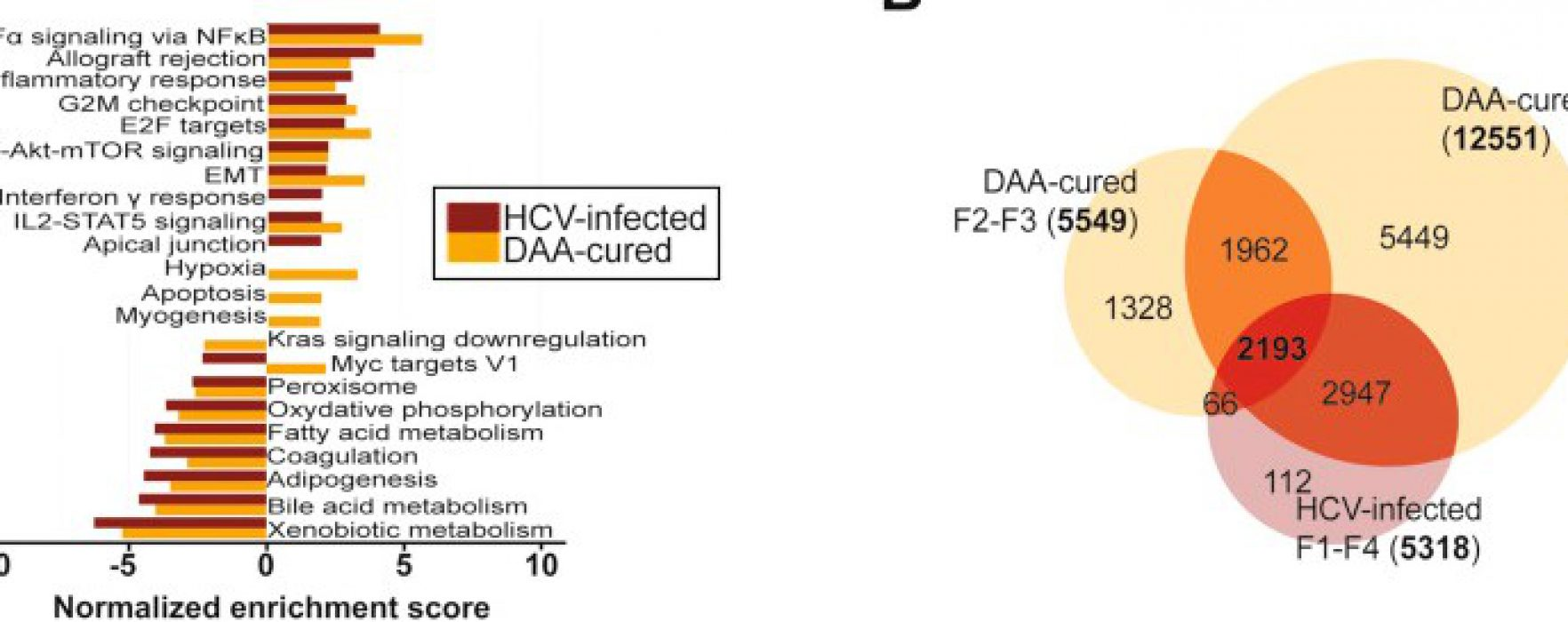 Why Are Patients Cured of HCV Infection Still at Risk for Liver Cancer?