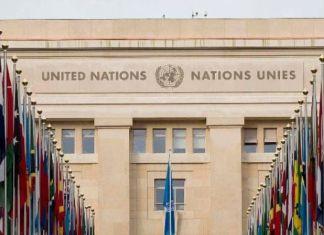 programme de stages des Nations Unies