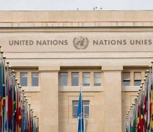 programme de stages des Nations Unies