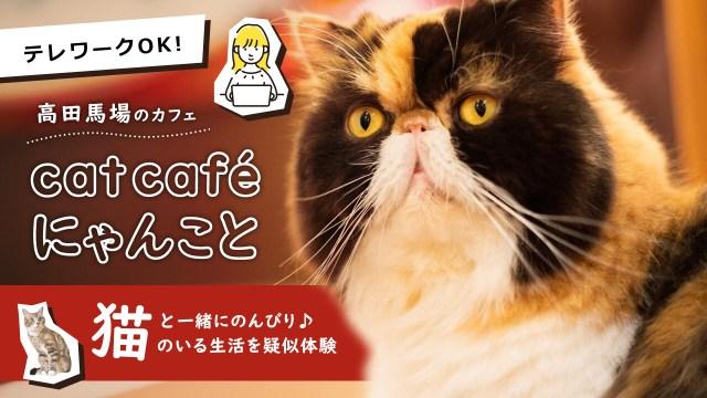 猫のアイキャッチ