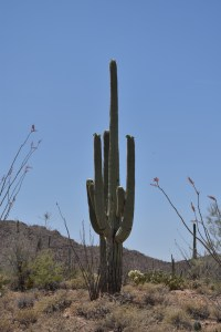 SSC_0217-copy-200x300 Saguaro National Park: Giant Cactus Sentinel