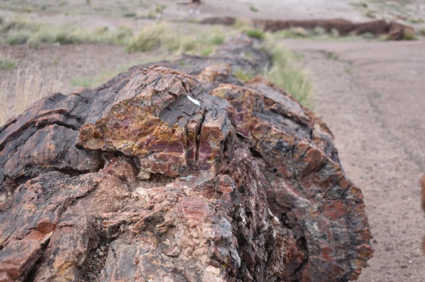Large-Log-for-Blog-1024x682 Petrified Forest National Park: Wood to Stone