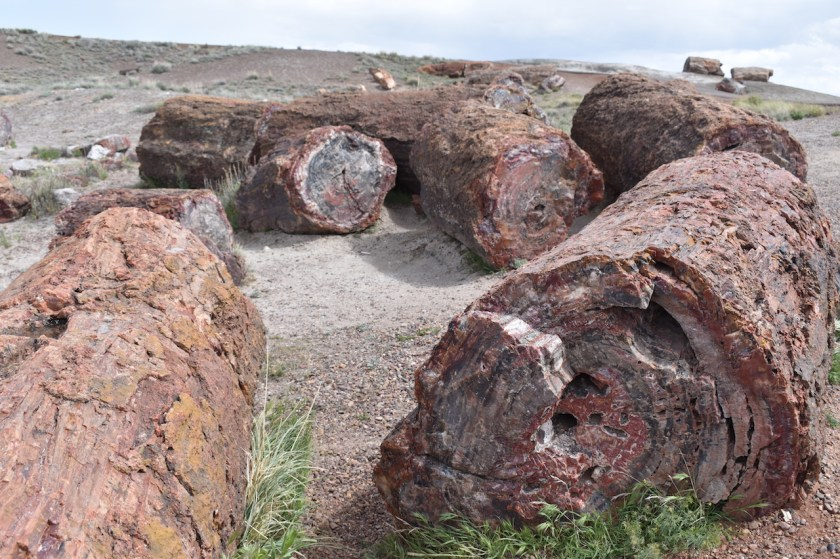 Petrified-Logs-for-Blog-1024x682 Petrified Forest National Park: 250 Million Years In the Making