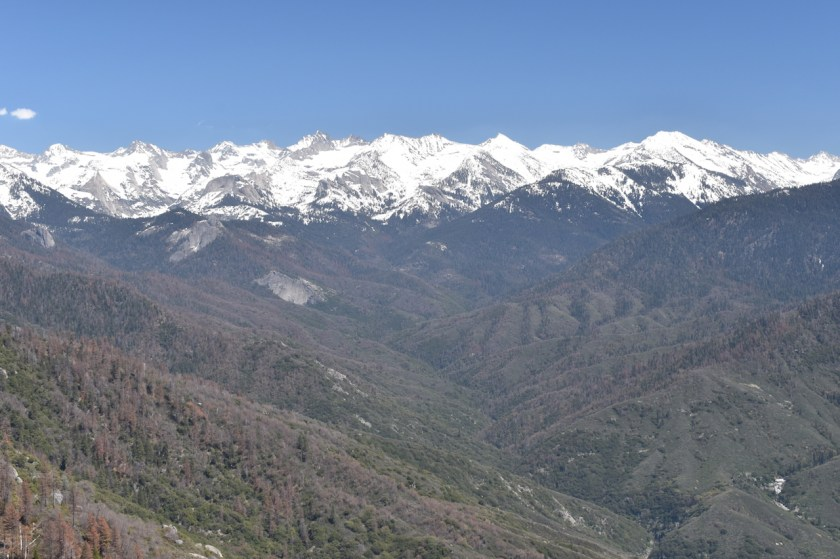 Blog-SSC_0601-1024x682 Sequoia National Park: Giants Standing Guard