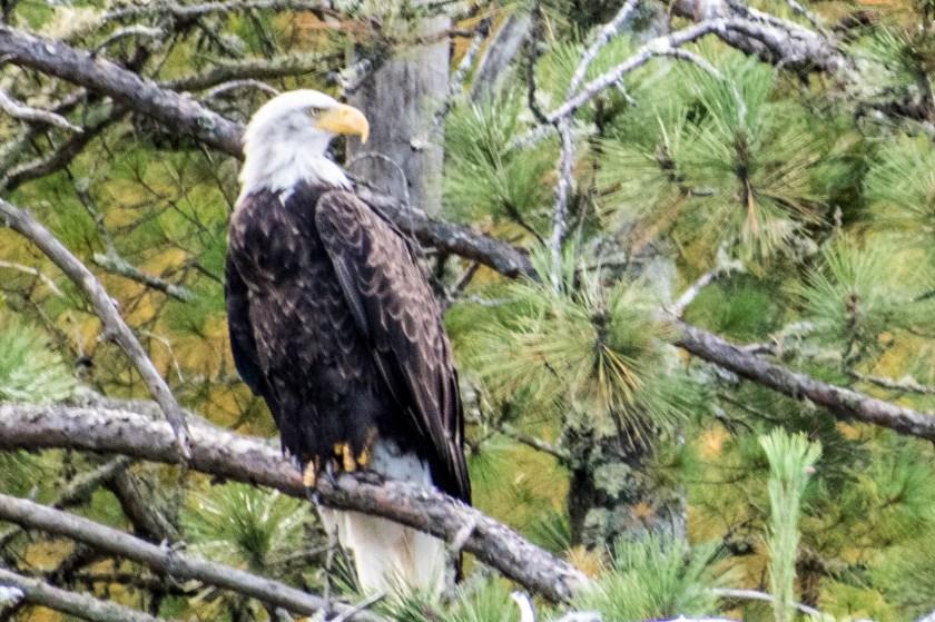SSC_2705-1024x682 Voyageurs National Park: Lake Paradise