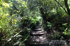 Forest walk in the blue mountains. Breathe in that fresh eucalyptus air!