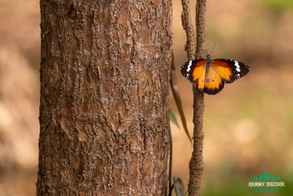 An orange lacewing butterfly sitting on a tree
