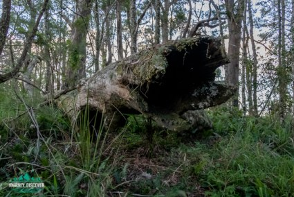 Fallen Tree Along The Ridge