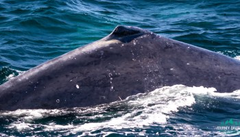 What To Bring Whale Watching