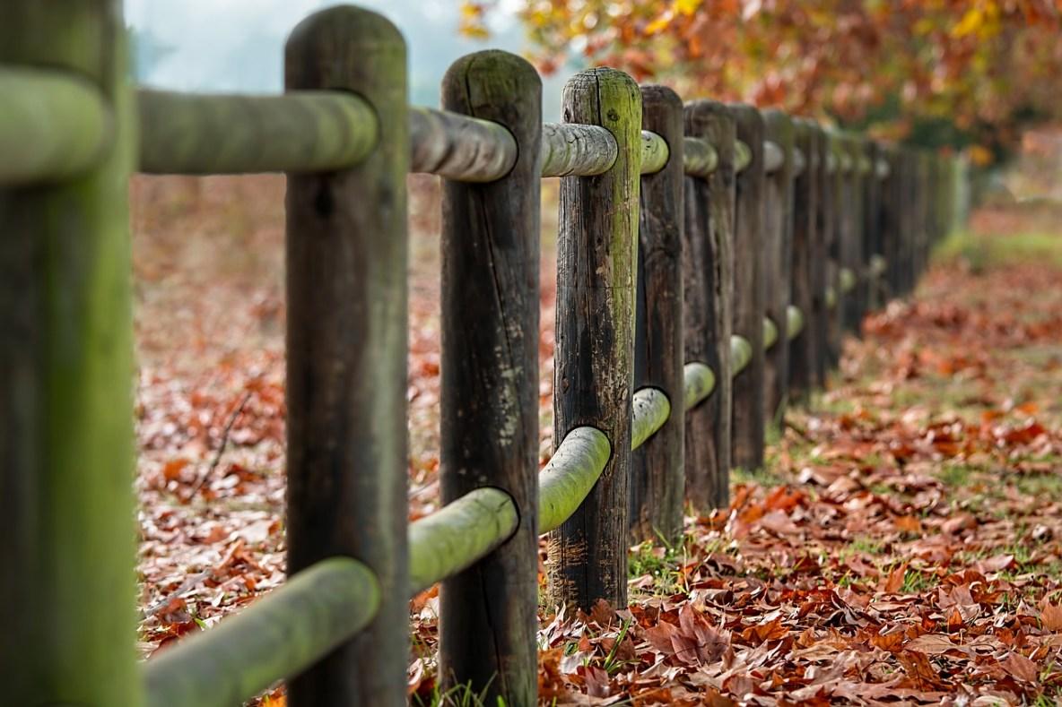 fence dog management