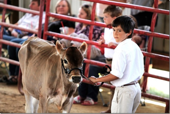 Dairy show 8