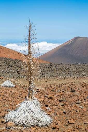 Haleakala Hike-24