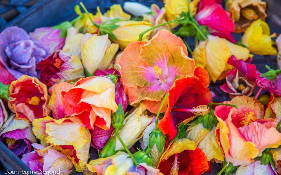 Best of Honolulu ~ KCC Farmer's Market