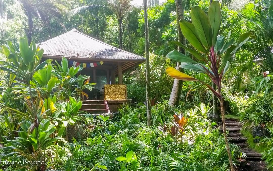 My Journey Into Silence ~ Vipassana Retreat in the Jungle: Part I