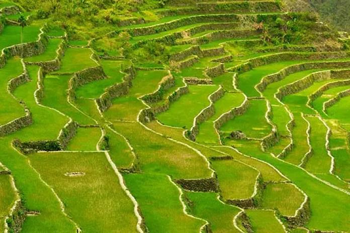 The Batad Rice Terraces