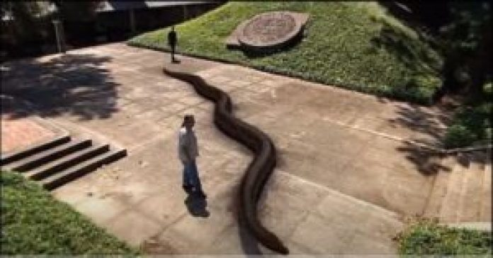 Artist's reconstruction of Titanoboa, with humans shown for scale | Photo Credit: University of Florida