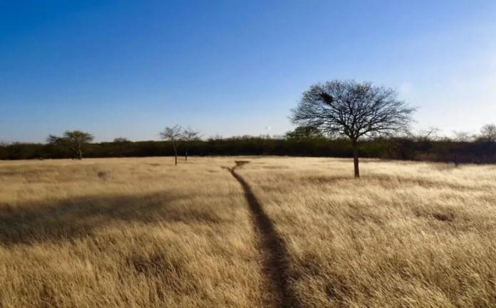 Savanna grasses in Mato Grosso Plateau