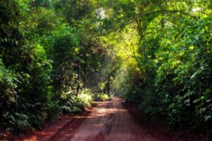 A track for cycling through Iguassu Falls National Park