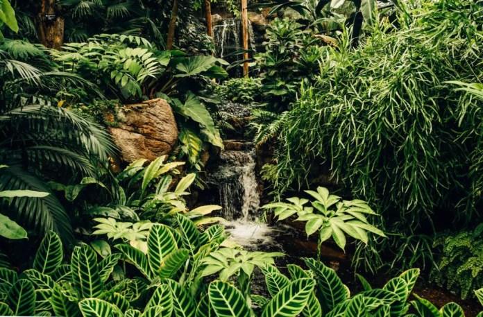 Types of Vegetation in Brazil