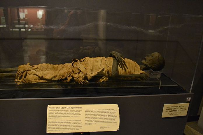 A picture of one of the famous embalmed bodies at the Rosicrucian Egyptian museum in San Jose. An essential location to visit in San Jose.