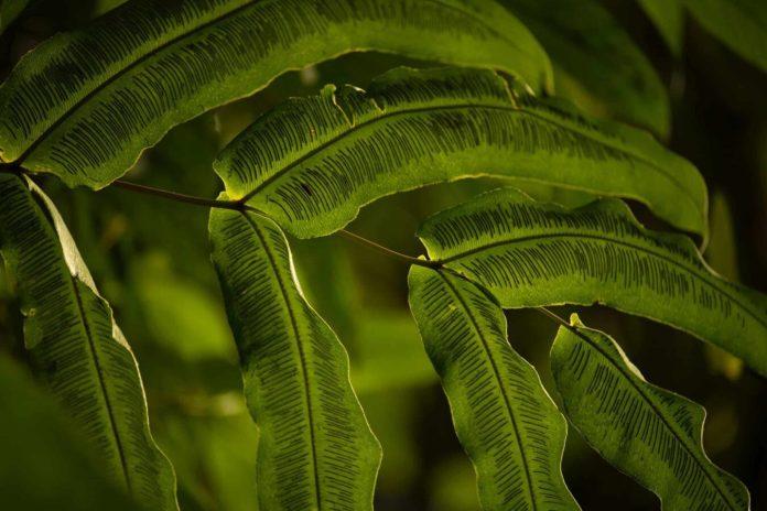 Forest, Costa Rica