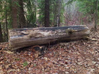 A bench provided by nature