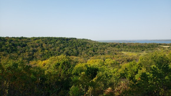 The dense canopy of the preserve