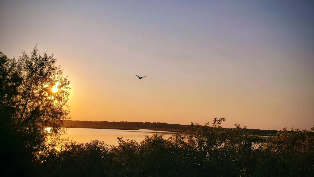 Flying free at sundown