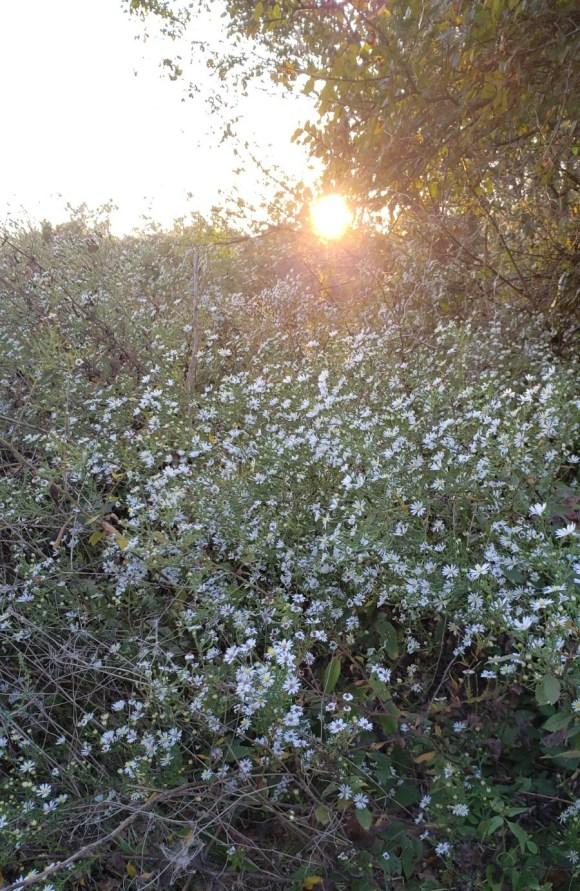 Wildflowers in bloom