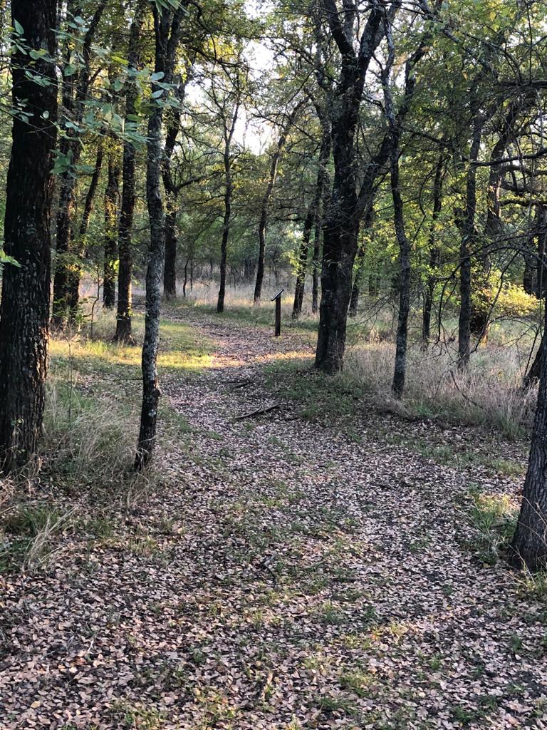 Crow Hill Trail path