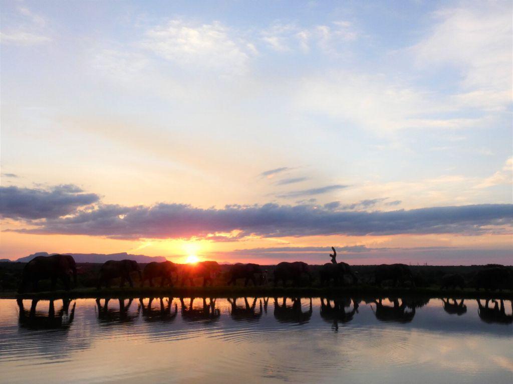 Safari photo, animals at waterhole
