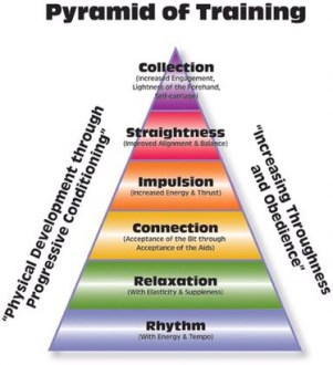 scales of training