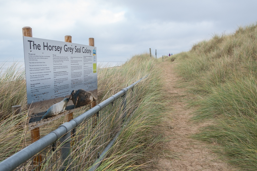 Horsey beach pathway