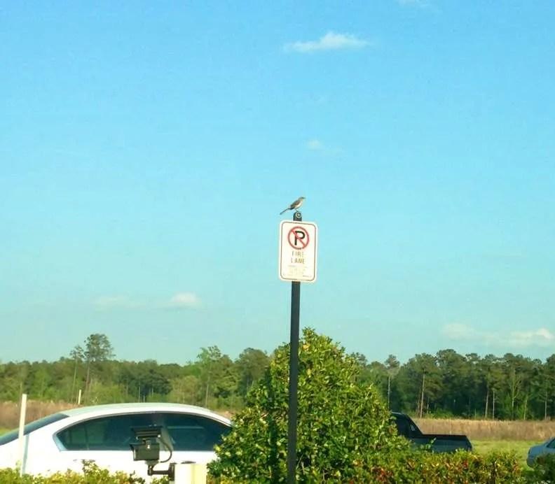 e5f29-sparrow