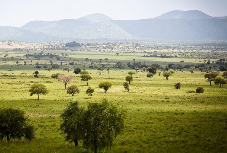 Bespoke Safaris in Kidepo Valley National Park, Uganda - Journeys by Design