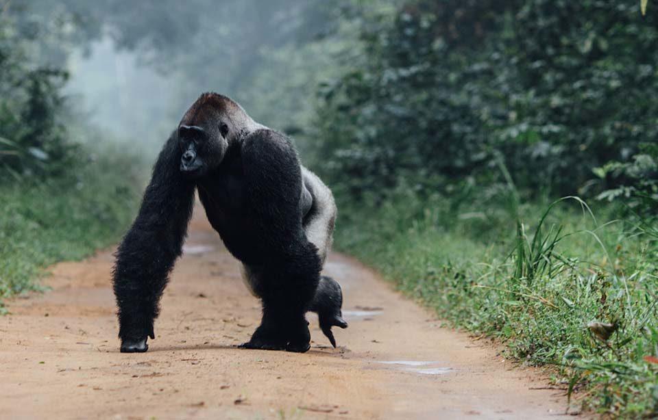 african safari destinations luxury