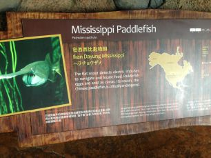 Hey look! Did you know the Mississippi Paddlefish...? Okay later.