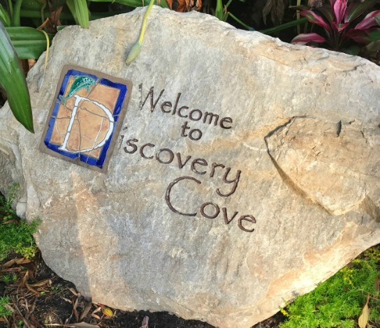Discovery Cove Orlando: Your Guide To Paradise
