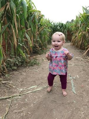 Going through the corn maze.