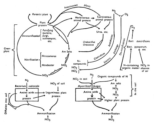 """Search Results for """"Blank Nitrogen Cycle Diagram Worksheet"""