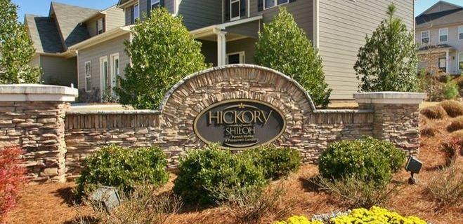 Hickory At Shiloh