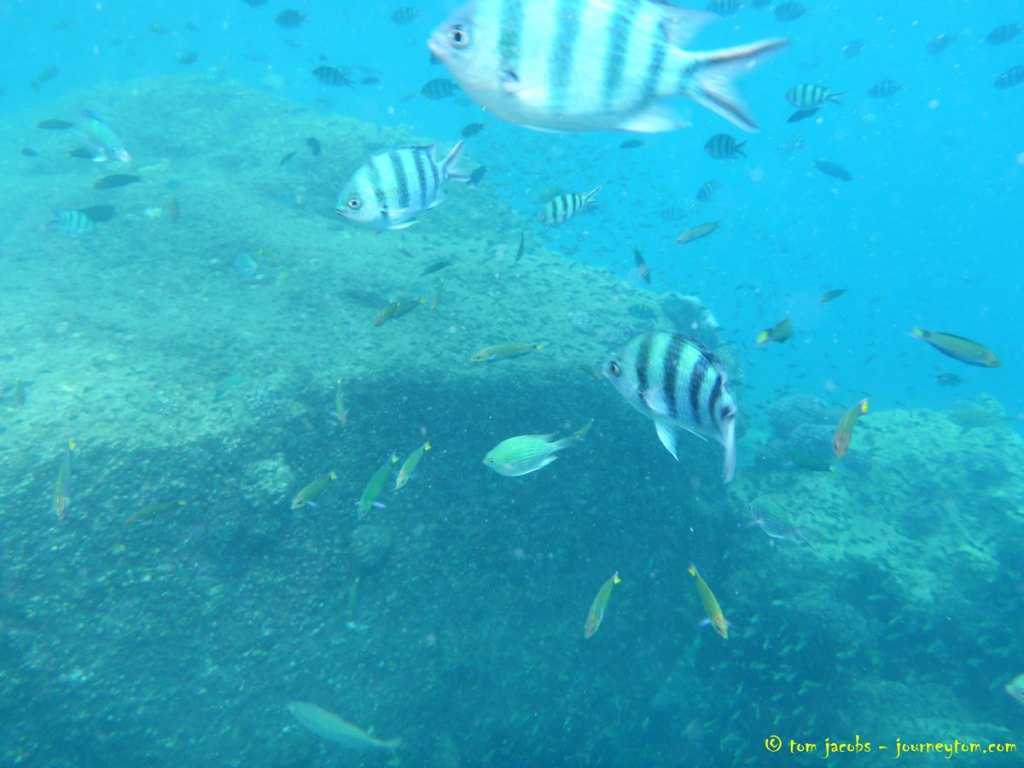 Underwater-Perhentian-Islands