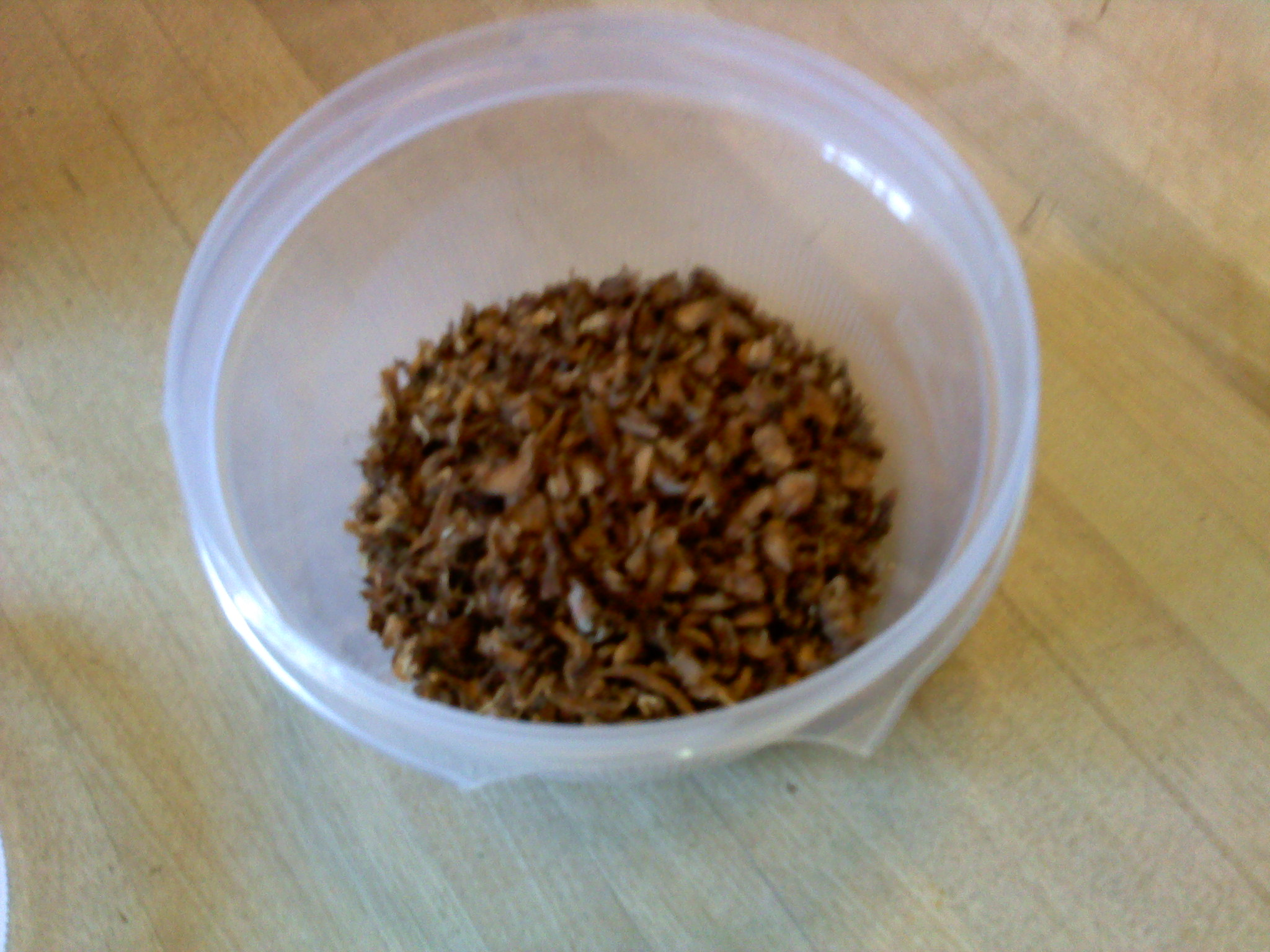 The finished roasted dandelion - about enough for 8 cups of brewed drink